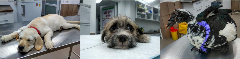 cabinet veterinar sector 3