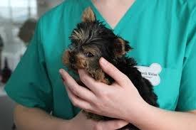 Medic veterinar
