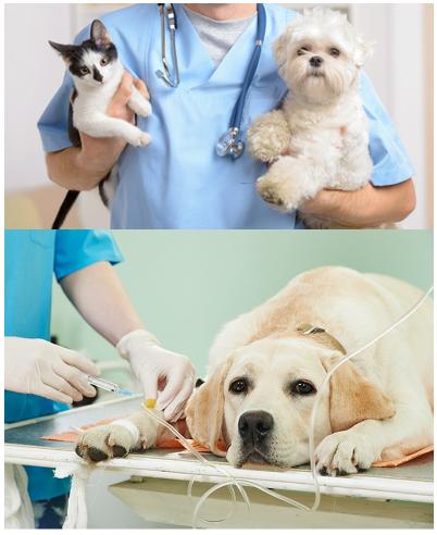 cabinet veterinar vaideeni valcea