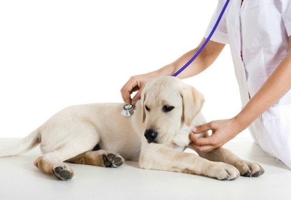 cabinet veterinar targu neamt