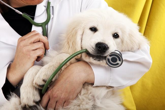 cabinet veterinar chitila