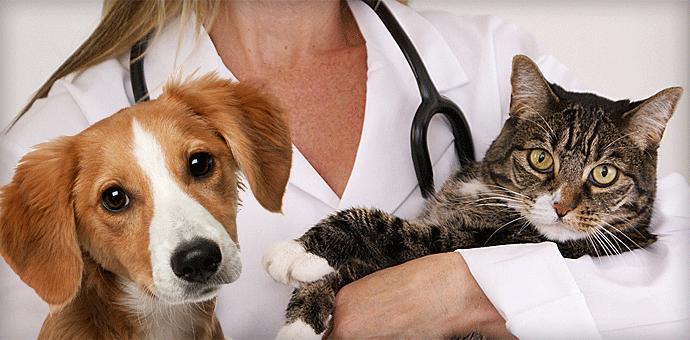 Clina veterinara