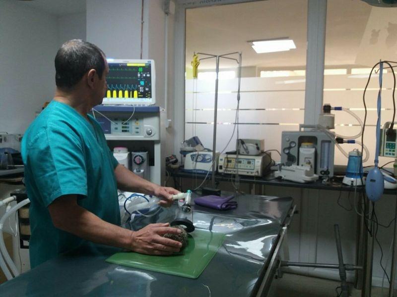 clinica veterinara sibiu