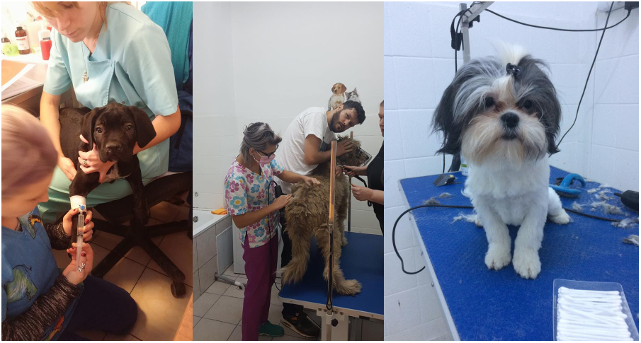 cabinet veterinar pet shop sector 3
