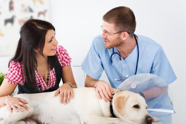cabinet veterinar slobozia