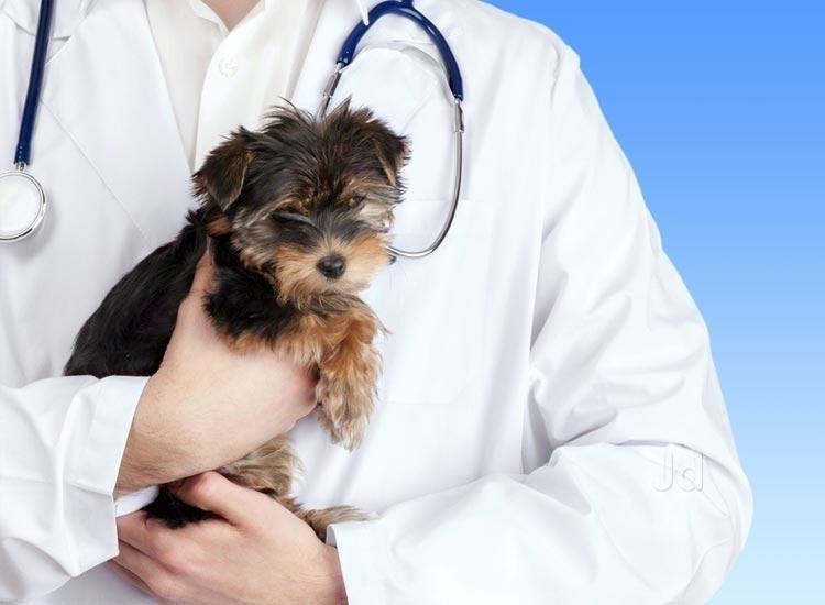 cabinet veterinar tulcea
