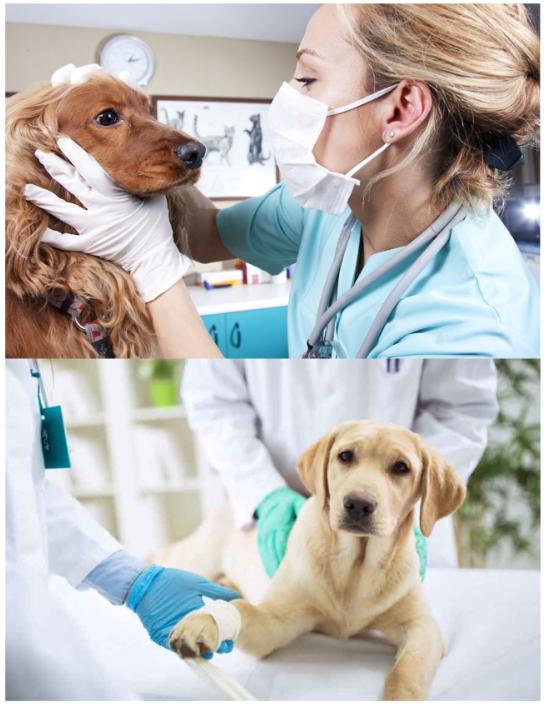 cabinet veterinar hunedoara