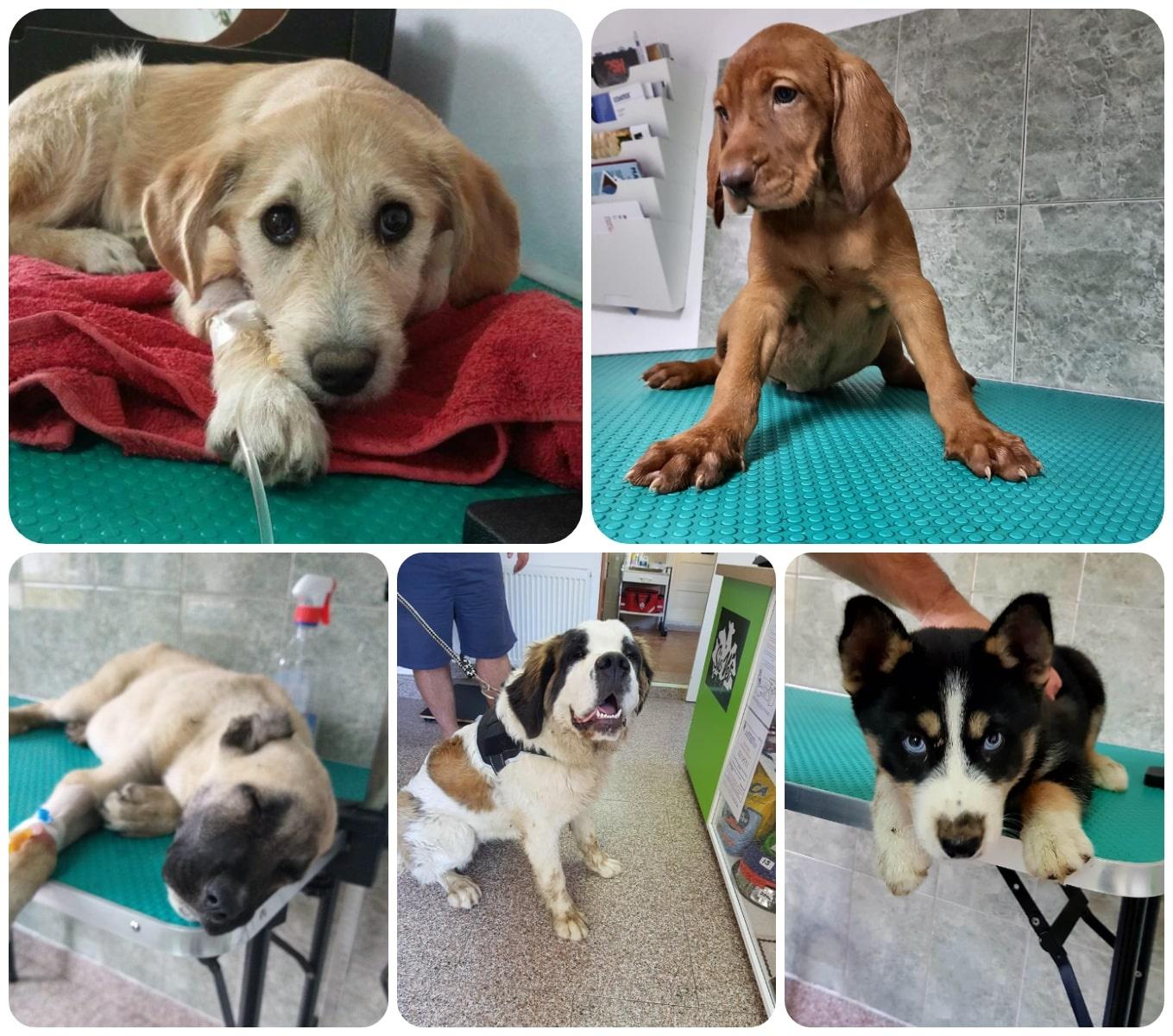 veterinar_sicula