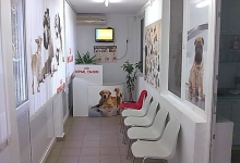 Veterinarul Cabinet si Farmacie Veterinara Royal Vet Braila
